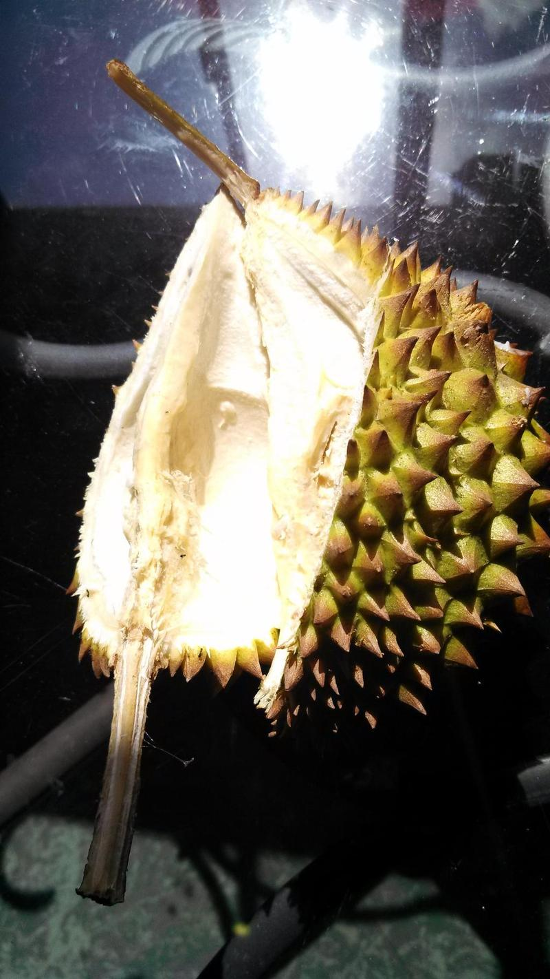 Durian (shell)